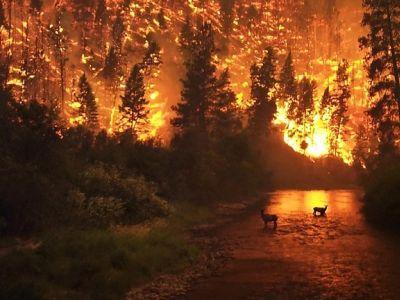 ВКаталонии брошенный окурок стал причиной крупного пожара вприродном парке